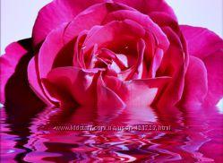 Розовая вода Розал Rozal, Gulabari Sahul, Индия-из индийской горной розы