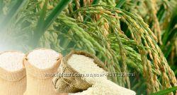 Чистое косметическое масло из зародышей риса рисовое масло хол. отжим