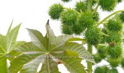 Масло касторовое рицинова олія первого холодного отжима, Индия для ресниц