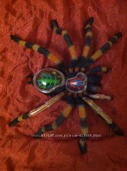 продам паука тарантула анатомического