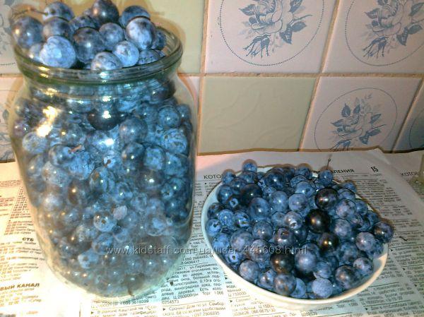 Терн, плоды и саженцы
