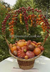 Колекційне насіння овочевих культур власного виробництва