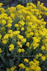 низкорослые растения для альпинария, рокария
