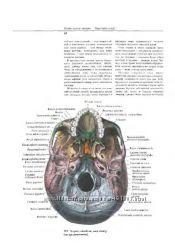 Атлас по анатомии Синельников Р. Д.