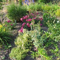 Набор из 10 видов многолетних цветов. Прием заказов