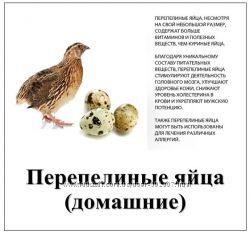 Перепелиные яйца домашние свежие - Киев, Обухов