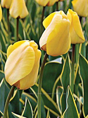 Лилейник, лилии, тюльпан, колокольчик многолетний, малина, клубника, ежевик