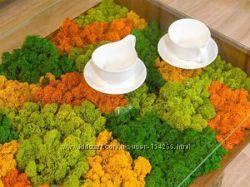 Натуральный мох, изделия из мха