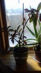 Фикус, кактус, гастерия, толстянка, хавортия