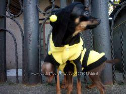 Одежда  Пчёлка для ваших любимчиков