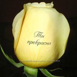Наклейки на живые цветы, говорящие цветы, Цветы скажут за вас