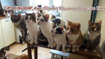 помощь приюту для кошек